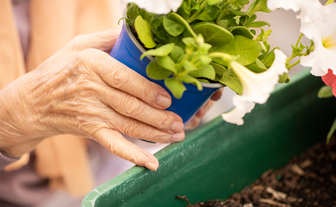 Close up of resident's hands gardening at Onkaparinga Valley Woodside nursing home